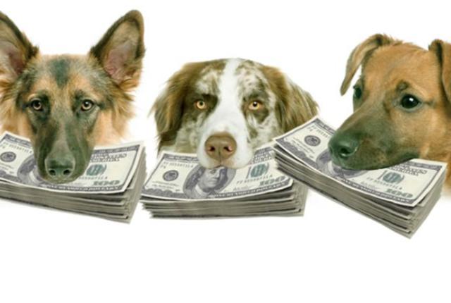 Pcfinancial retirement portal service dogs