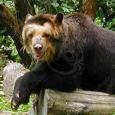 Jim Bear