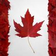 Maple Markets