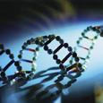 DNA Decoder