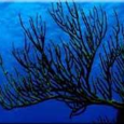 Black Coral Research