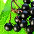 Elderberry Investments
