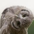 Night Owl Investor