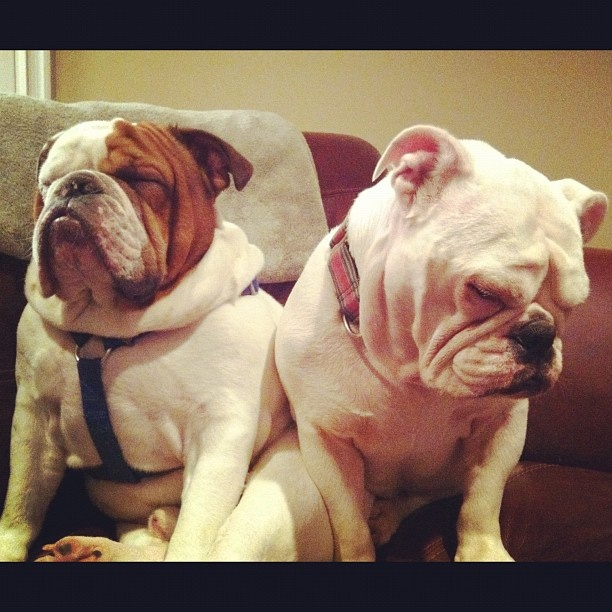 bulldog investors two bad ways to spend your money two harbors investment 5643
